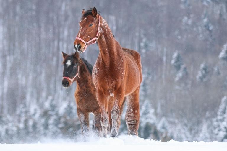 Cosimo war ein ganz besonderes Pferd