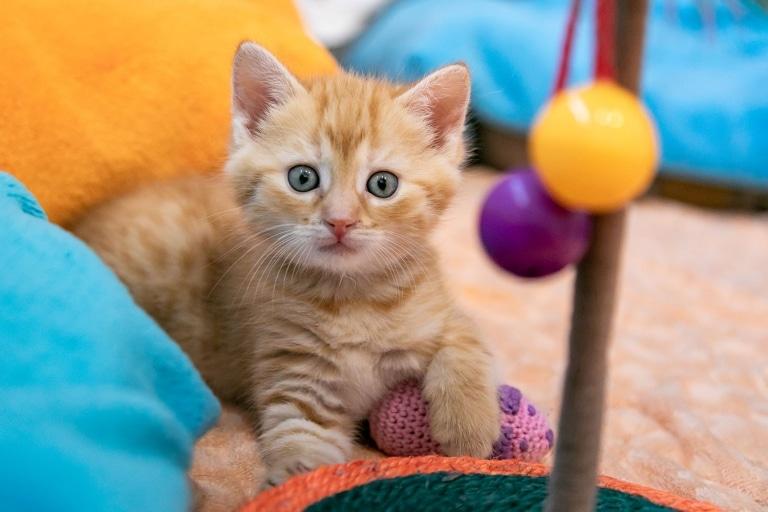 Die neugierige kleine Ginger