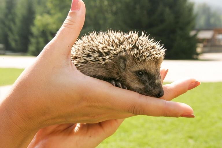 Arian wurde in die Freiheit entlassen und lebt jetzt ein schönes Leben inmitten der Natur.