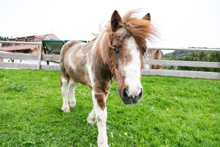 Pony Jonathan fühlt sich in seinem neuen Zuhause pudelwohl