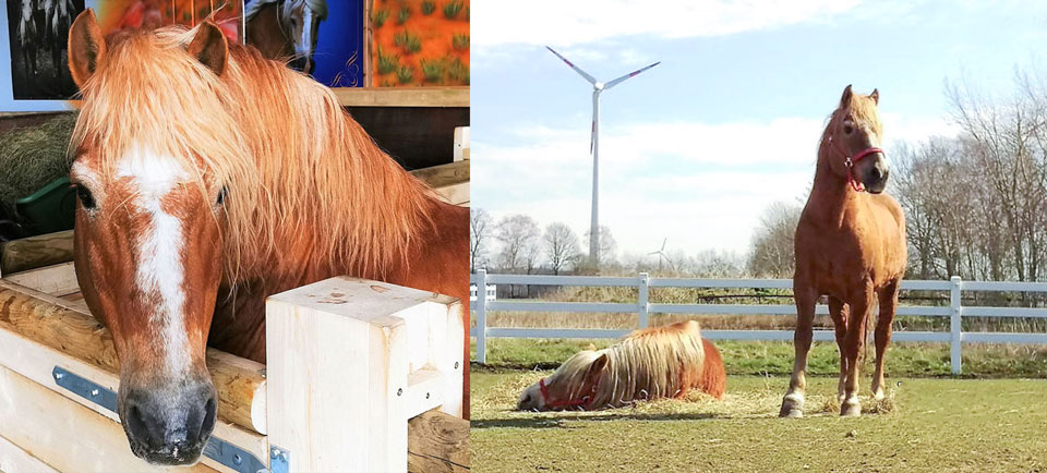 Pferd Namo lebt auf der Gut Aiderbichl Ballermann Ranch