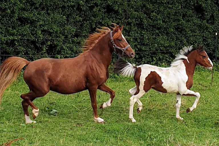 Tessa und Paloma machen gemeinsam die Weiden auf der Gut Aiderbichl Ballermann Ranch unsicher.