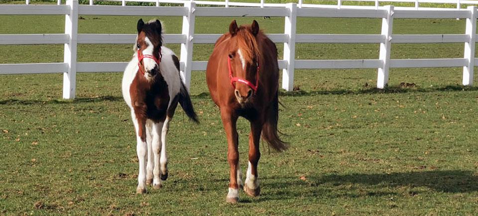 Tessa und Paloma lieben ihr neues Zuhause auf der Ballermann Ranch