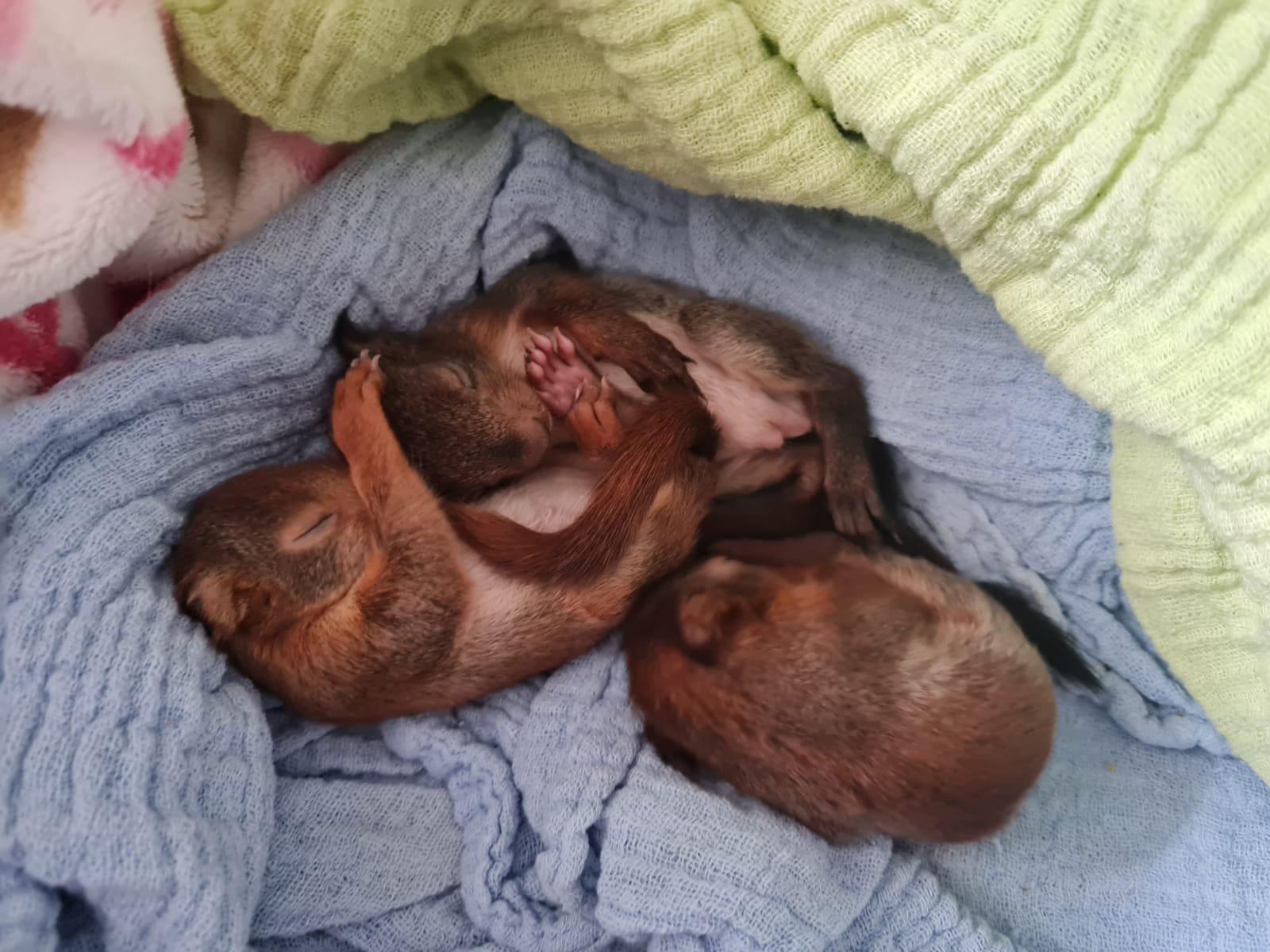 Live Webinar Eichhörnchen und Siebenschläfer