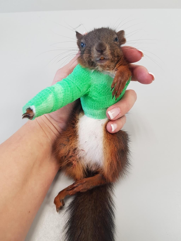 Live Webinar - Erstversorgung für Tierärzte