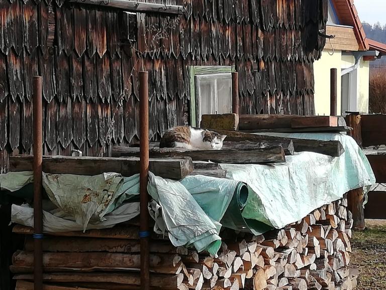 Katze Weibi in ihrer alten Heimat