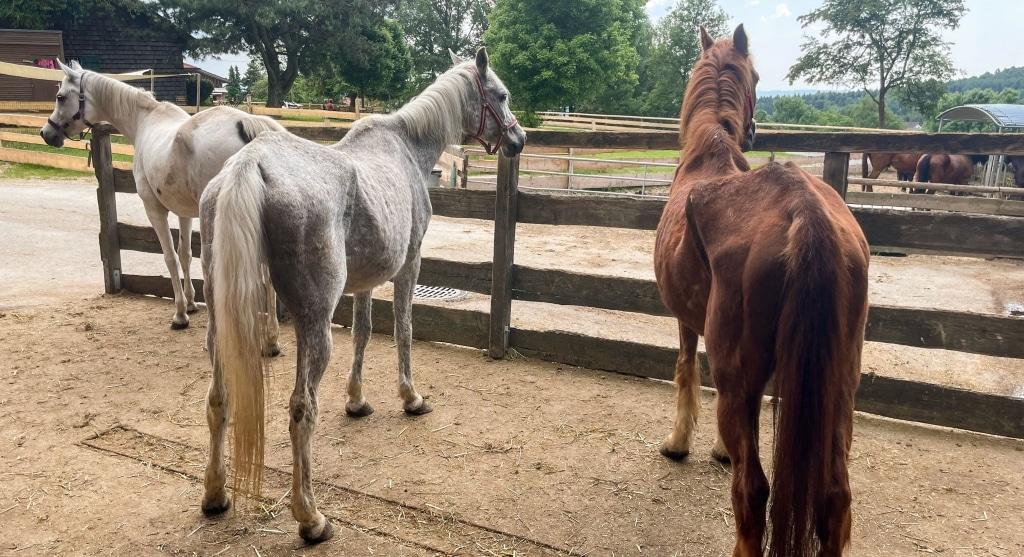 Die Pferde brauchen Ihre Hilfe!