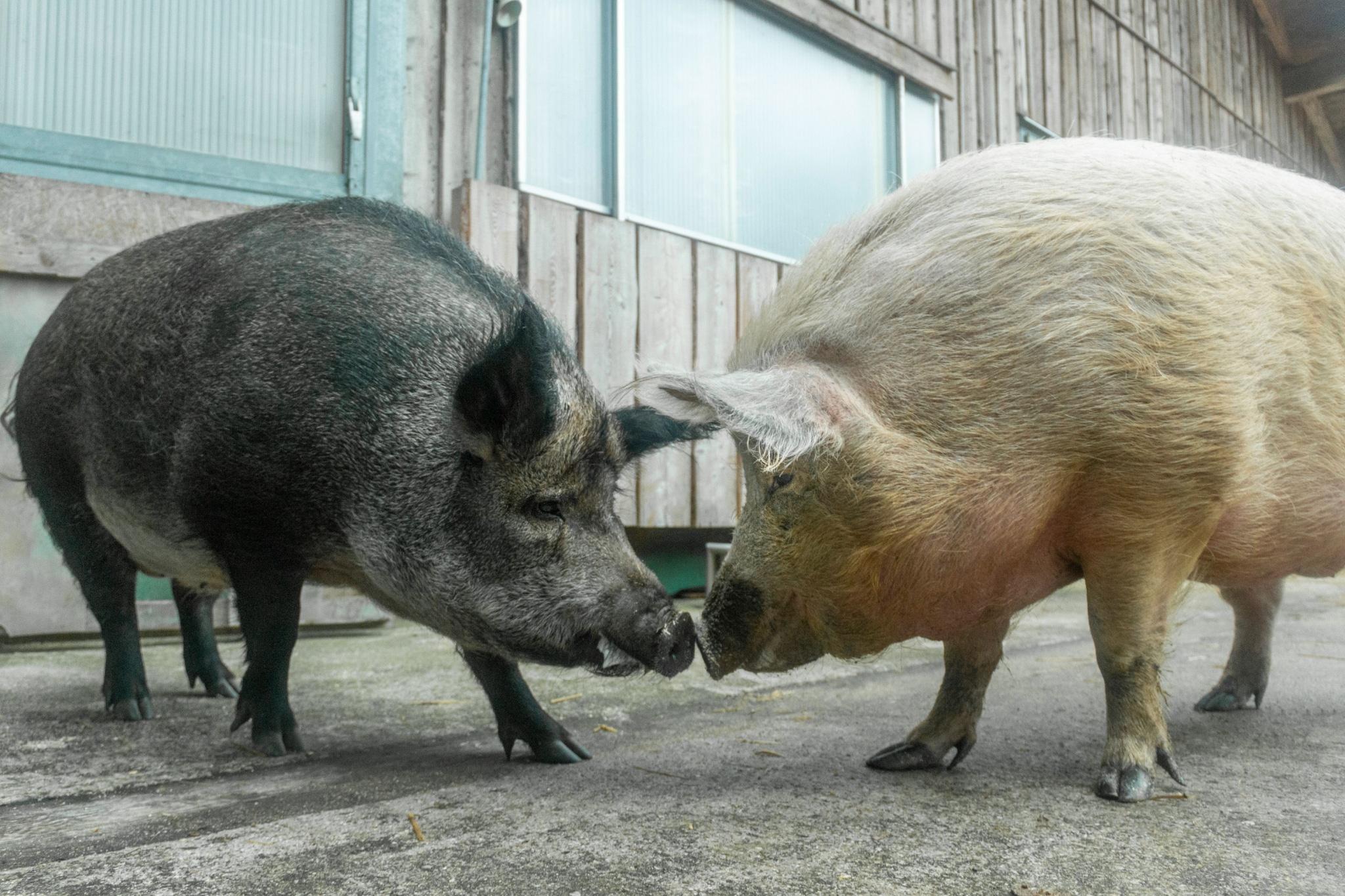 Emma und Berta sind glücklich auf Gut Aiderbichl zu sein