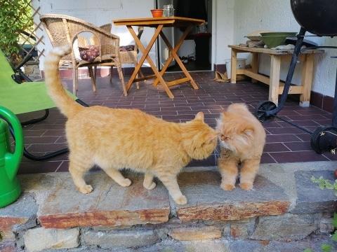 Kater Dreamy hat sich schon mit anderen Katzen angefreundet