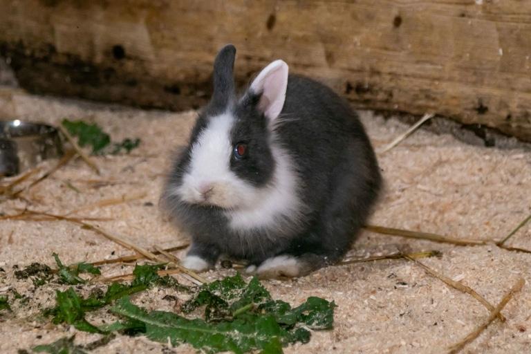 Kaninchen auf Gut Aiderbichl