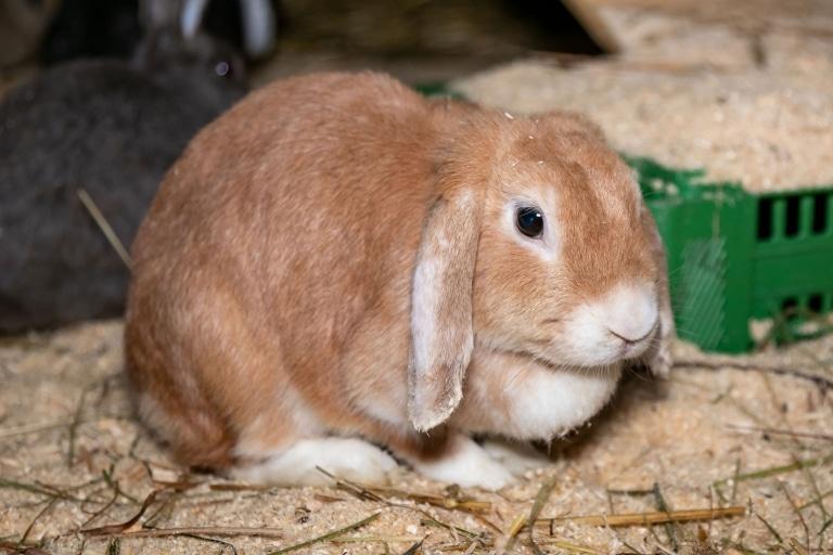 Kaninchenrettung Gut Aiderbichl