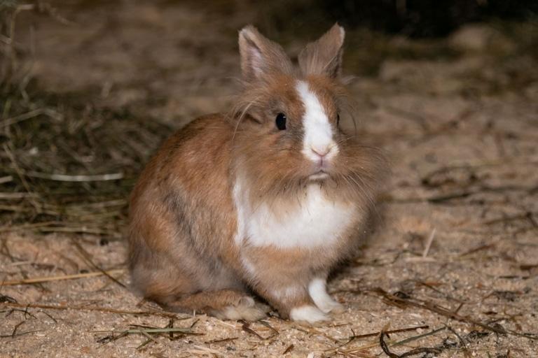Dieses Kaninchen sucht ein neues Zuhause