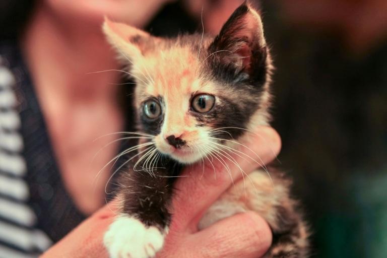 Katze Eleni: Entsorgt im Müll
