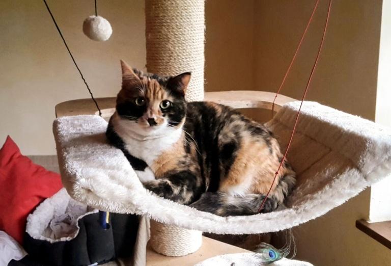 Katze Eleni als erwachsene Katze