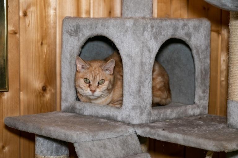 Katze Mischa auf Gut Aiderbichl Henndorf