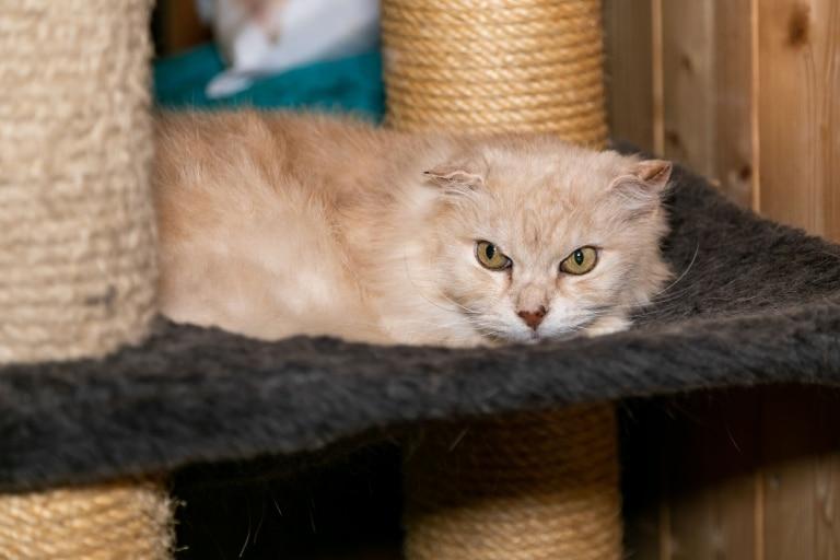 Katze Olga auf Gut Aiderbichl Henndorf