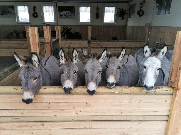 Die gesamte Esel-Familie konnte aufgenommen werden