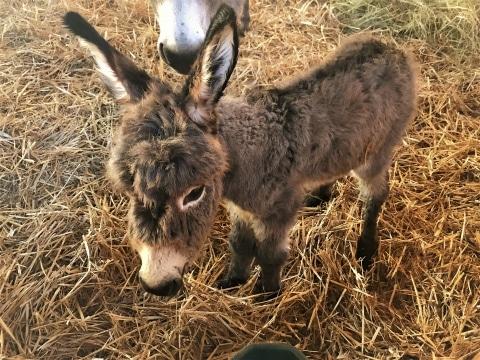 Kleines Esel-Baby Sally auf der Gut Aiderbichl Ballermann Ranch