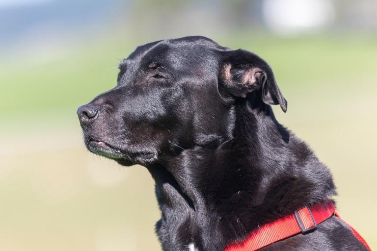 Hund Apollo sucht ein neues Zuhause