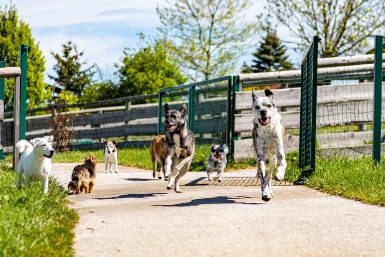 Die Hundegruppe genießt den Auslauf am Hundepfad auf Gut Aiderbichl