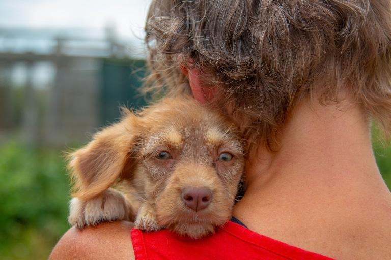 Auch die Hundewelpen auf den Straßen in Rumänien suchen Liebe und Zuneigung