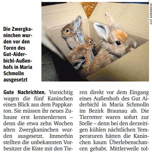 Gut Aiderbichl rettet fünf Kaninchenbabys