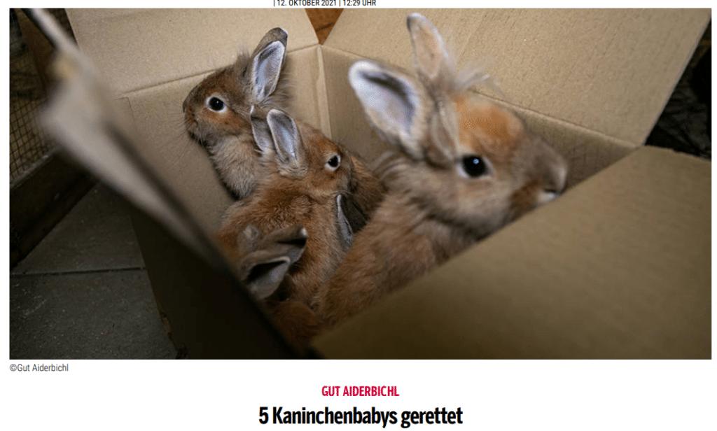 oe24. - Kaninchenrettung Maria Schmolln