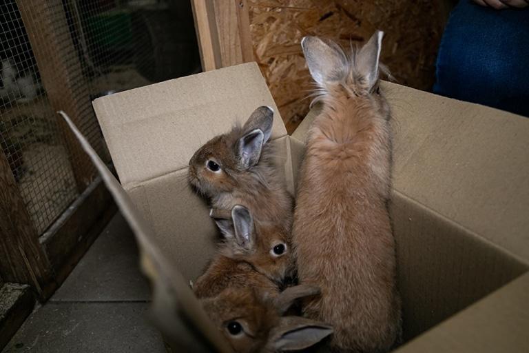 Die fünf Kaninchengeschwister blicken noch etwas schüchtern aus dem Karton