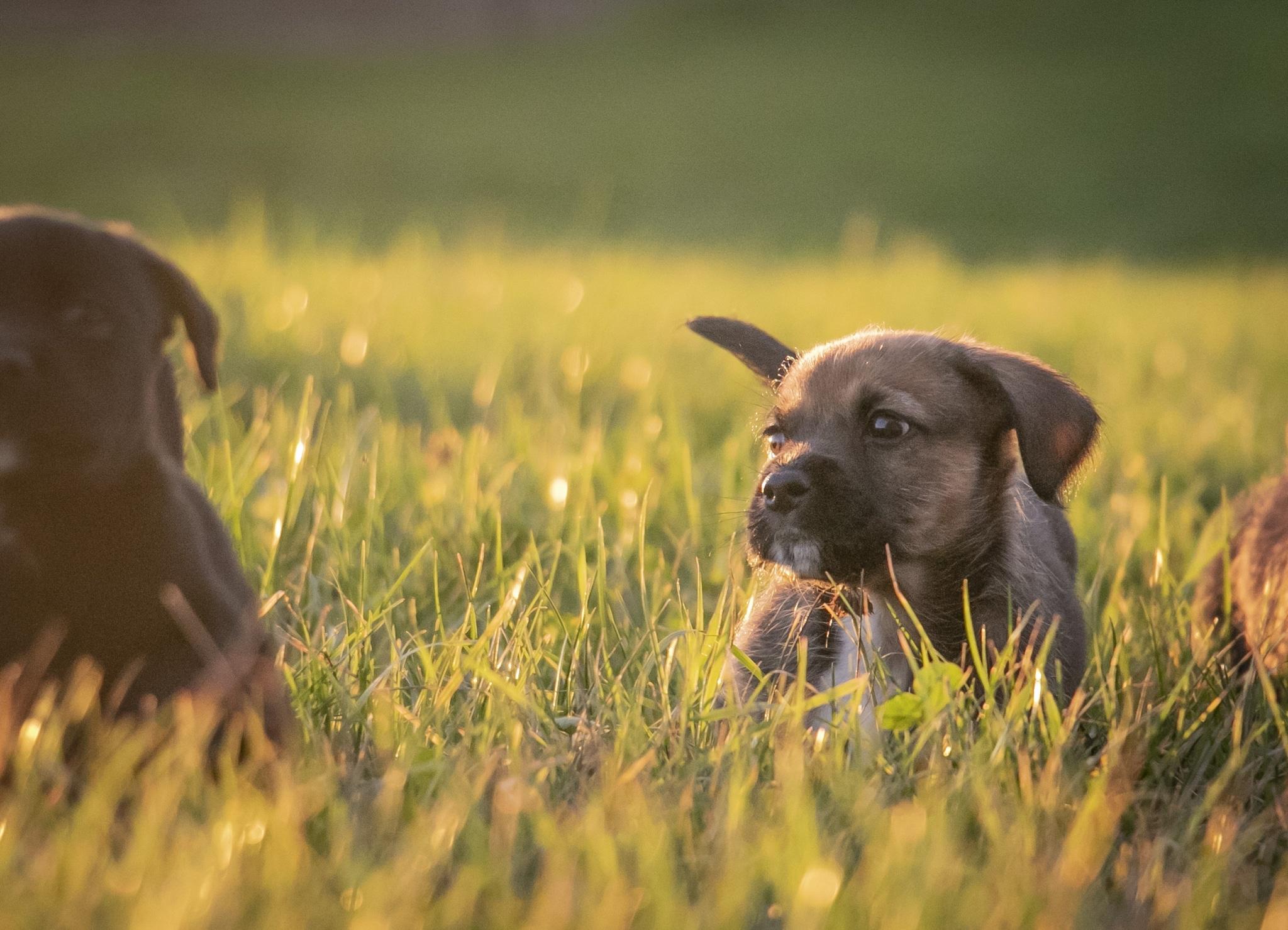 Unsere Welpen auf Gut Aiderbichl fetzen durch das frische Gras