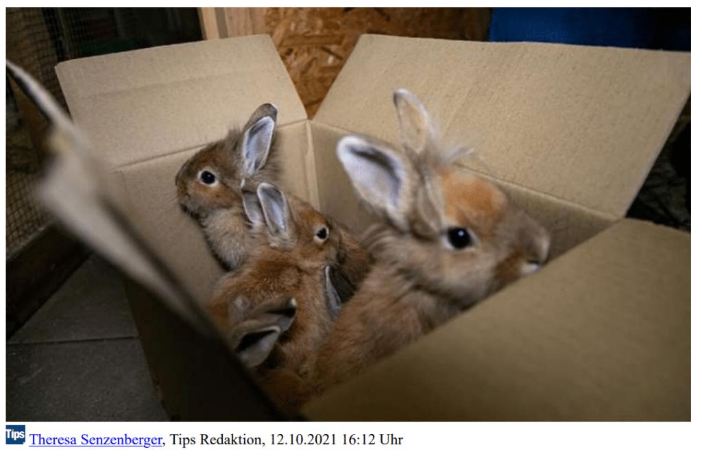 Tips Braunau - Kaninchen gerettet