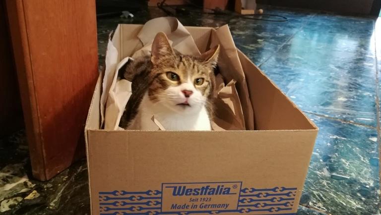 Kater Luka liebt wie jede Katze seine Boxen