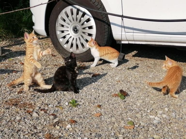Ausgesetzte Katzen auf dem Gut Aiderbichl Parkplatz