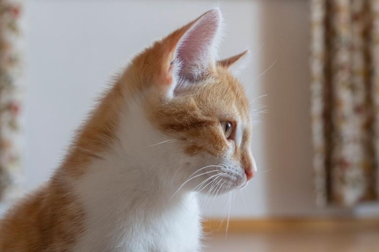 Katze Dan