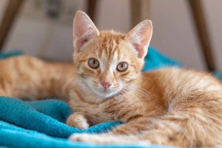 Katze Pirro