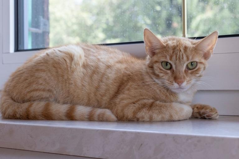 Katze Rubia