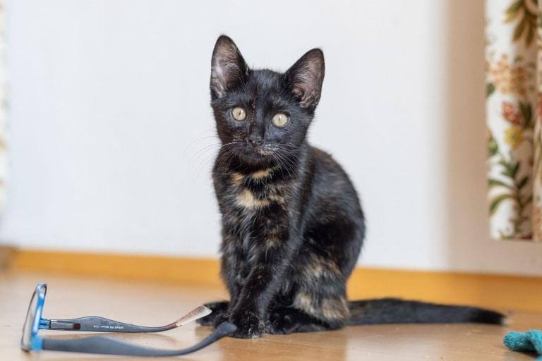 Katze Scarlett